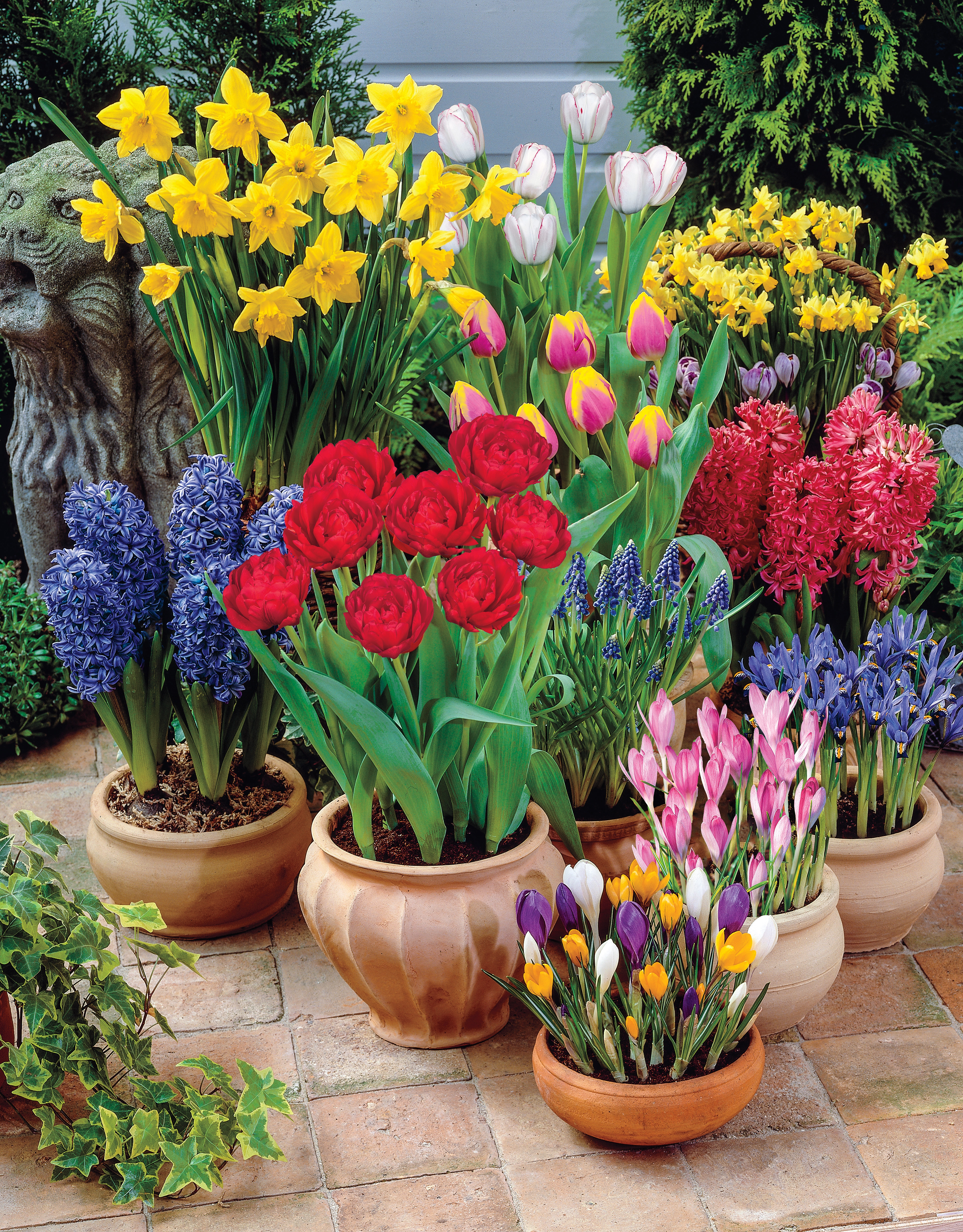 My Bulbs Are Going To Pot S Breck S