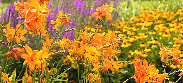 Gardening Tips For Zones 5 6 Breck S