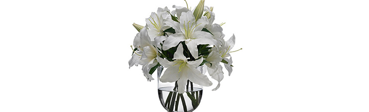 Lilien sind ausgezeichnete Schnittblumen.
